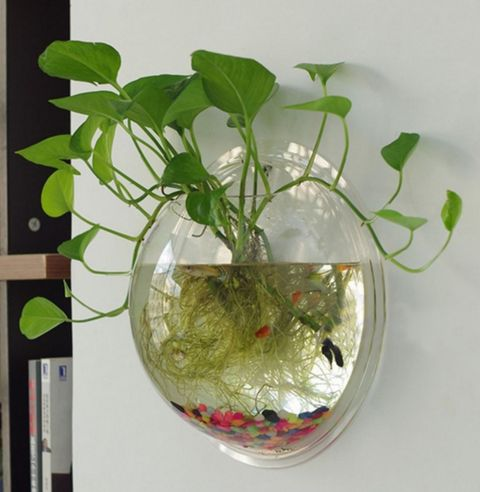 Material: Acrylic Color: Transparent Attractive, amazing wall mounted fish tank! Superior Transparent Acrylic material, beautiful and durable. Show off your fish! Maximize the use of your home or offi More