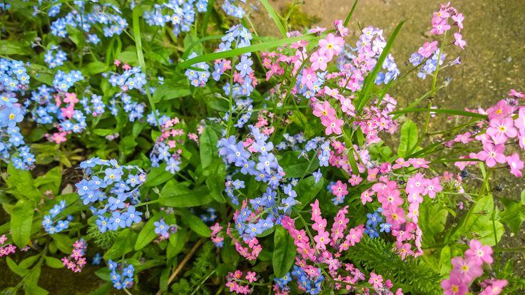 #wiosna - moja ulubiona pora roku. Więcej zdjęć z Lumii tutaj: http://www.snaphub.pl/galerie/nokia-lumia-1020-najlepszy-fotograficzny-smartfon