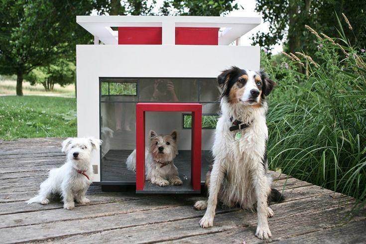 Çatısında solar panel olan köpek kulübesi. Sürdürülebilir yaşam seçenekleri köpek kulübeleri için de geçerli