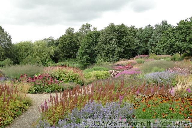 Hybrid planting -- Millennium Garden at Pensthorpe Nature Reserve.  Piet Oudolf, garden designer