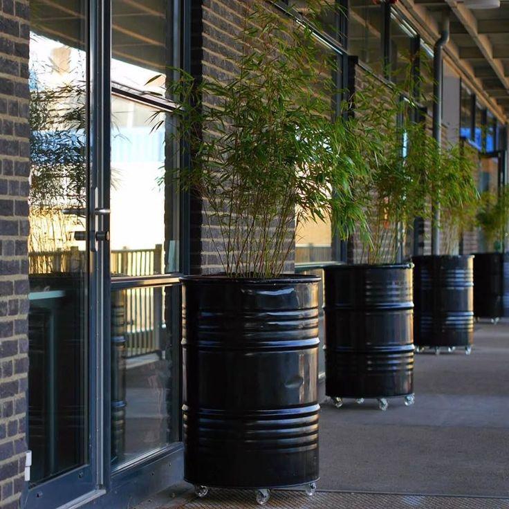 Industrial Planters, made out of Oilbarrels. Industriële Plantenbakken, gemaakt van olievaten.