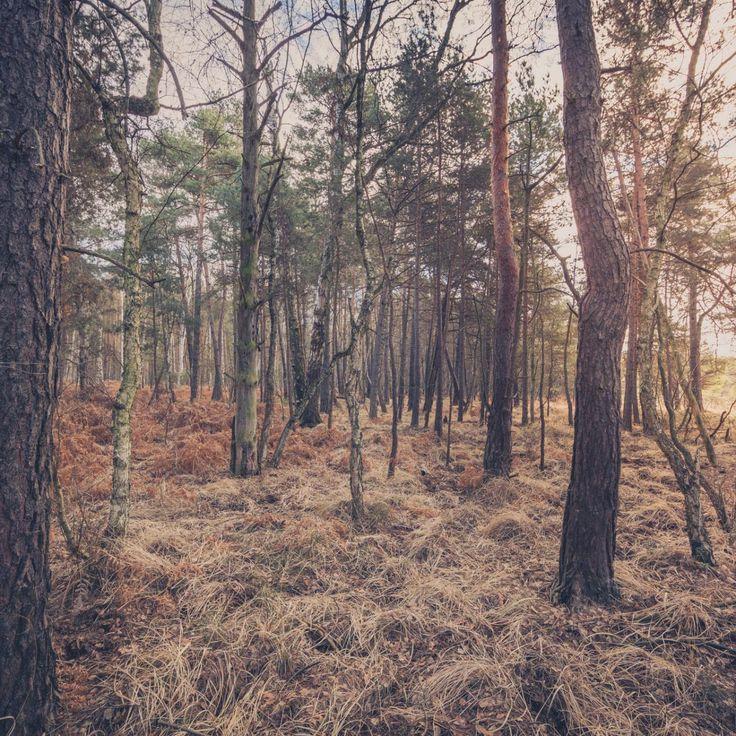 Bild 24 - Zadlitzbruch in der Dübener Heide bei Torgau | © Michael Eichhorn #zadlitzbruch #dübener_heide #naturschutzgebiet #sachsen #saxony #ausflugsziel #torf #moor #hochmoor #wandern #dübenerheide #duebenerheide #torgau #baddueben #baddüben #wald #sumpf #sumpfgebiet #natur #naturschutz #reservat #biosphäre #biosphere #farn #naturpark #falkenberg #trossin #dresden #nordsachsen #leipzig #sehenswürdigkeit #ziel #sonnentau #sumpfdotterblume #kranich
