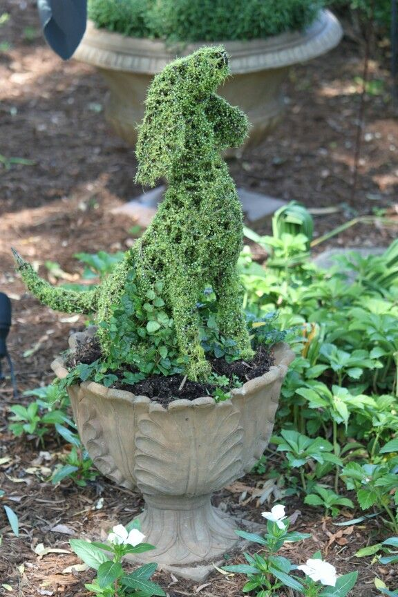Puppy topiary I planted with creeping fig