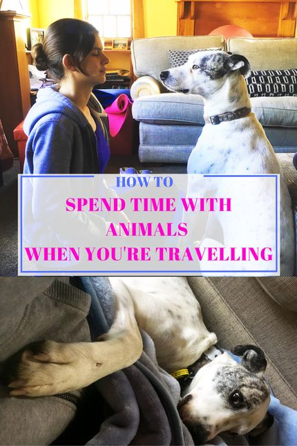 HOW TO BE AROUND ANIMALS WHEN YOU ARE TRAVELLING? - Be Yourself by Charlie