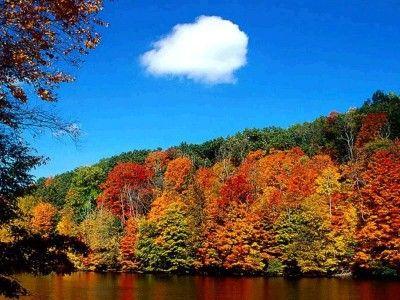 El árbol es una planta perenne generálmente con un sólo tronco bien lignificado (leñoso). Los árboles constituyen elementos escenciales en la estructura de toda