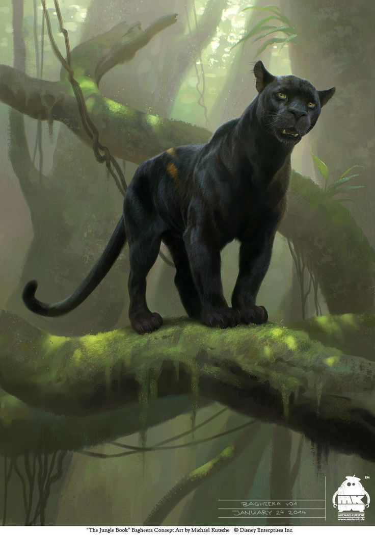 The Jungle Book: Bagheera concept, Michael Kutsche on ArtStation at https://www.artstation.com/artwork/qZo5N
