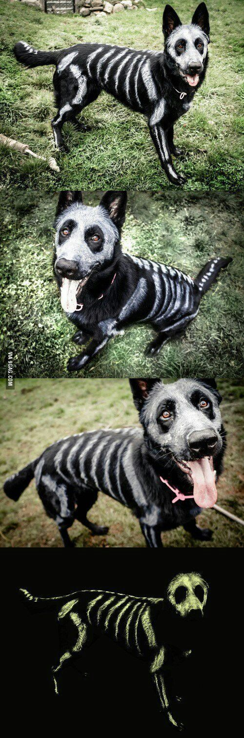 I want to do this to my dog for Halloween