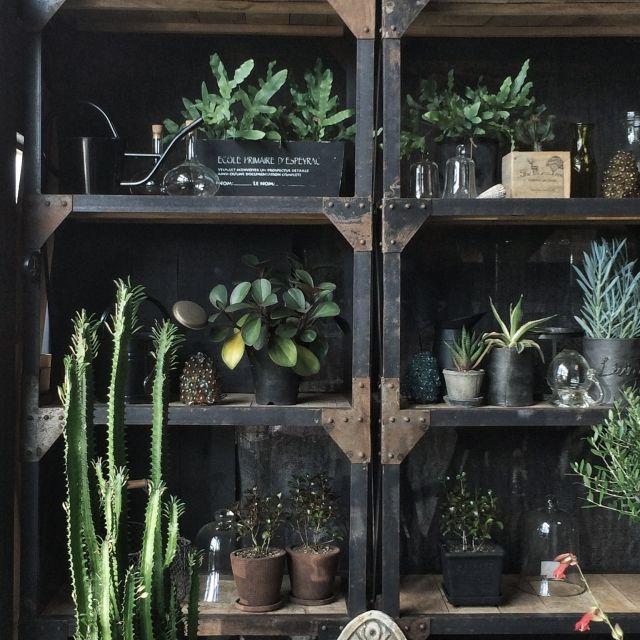 ChocolatChocolateさんの、男前も可愛いも好き,ユーフォルビア,ガーデニング,ユーホルビア,多肉植物,植物,The ForesTree,植物のある部屋,オリジナル,ボタニカル,観葉植物,botanical,Garden雑貨,DIY,Instagramやってます,古いもの,NO GREEN NO LIFE,植物のある暮らし,handmade,雑貨,海外インテリアみたいに,blog更新しました♡,セルフリノベーション,ハンドメイド,手作り,アンティーク,棚,のお部屋写真