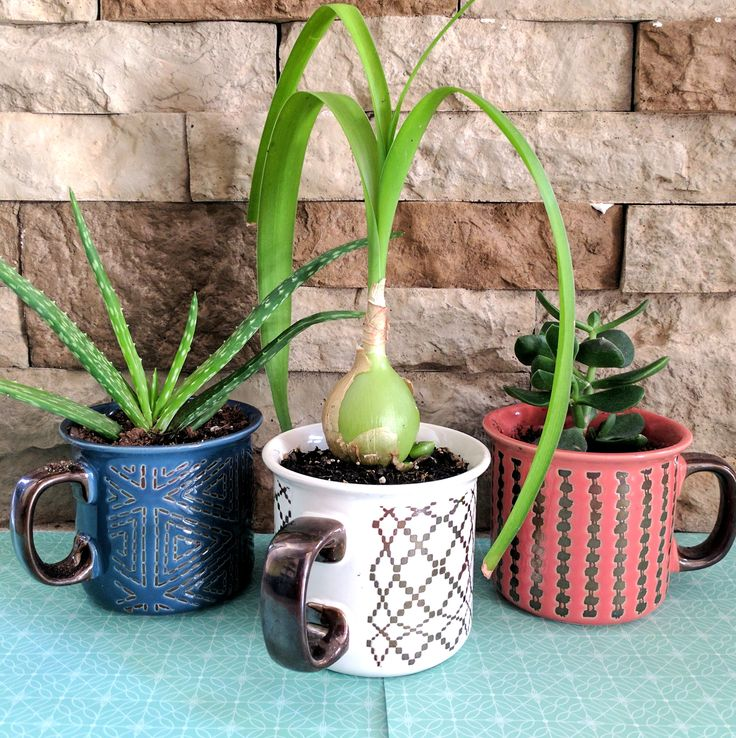 Make A Mug Into A Planter By Drilling Drainage Holes With A Diamond Bit Planters Succulents In Containers Make A Mug