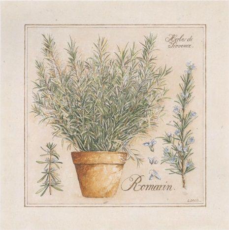 Herbes de Provence I (Laurence David)