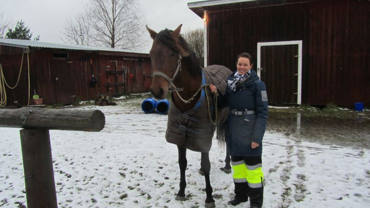 Ryttare efterlyser mera hänsyn i trafiken. Intresset för ridning växer kraftigt i Österbotten. I dag finns det drygt 10 000 personer som sysslar med ridning i landskapet. På bilden Lena Lahti och hästen Mango.(Svenska Yle 10/2012).