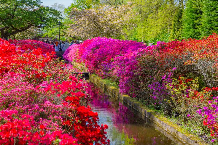 Colourful canal side Most beautiful gardens, Dutch