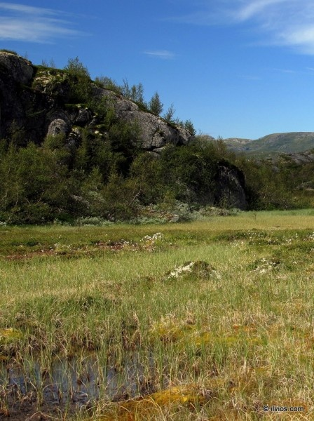 Meadows of Central Norway