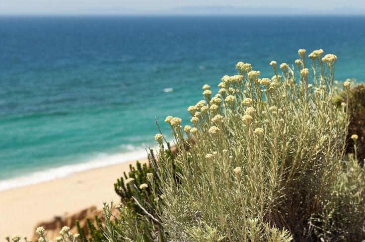 In Sardegna: le 5 piante che possono aiutare la tua salute