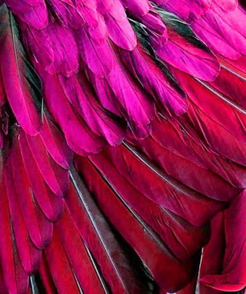 Feathered by Joe Bonita