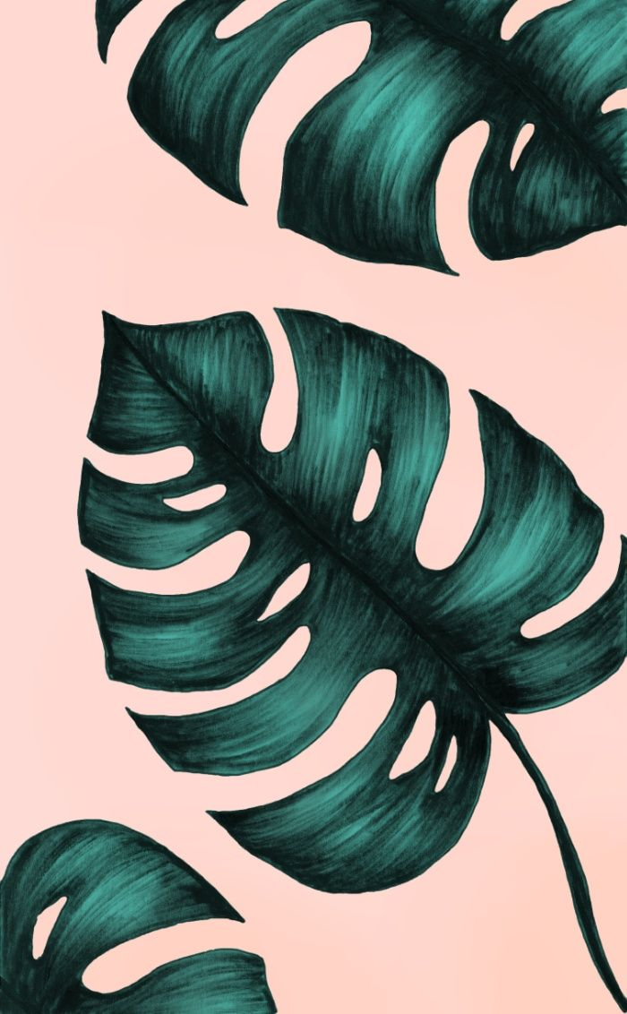 Philodendron Art Print by Nayla Smith