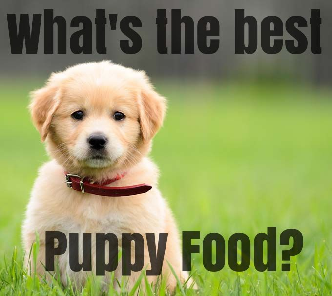 Getting a puppy is a super fun experience, but figuring out how to properly care for them can be stressful. Is the food you're offering your dog up to par? Could you be giving your dog better food? What's in your dog food brand? Kim's Pets breaks down the top puppy food brands to help you give your pooch the right nutrition!  We review the top dog food brands and give recommendations for large breed pups, small breed pups, natural foods, holistic dog foods and more!