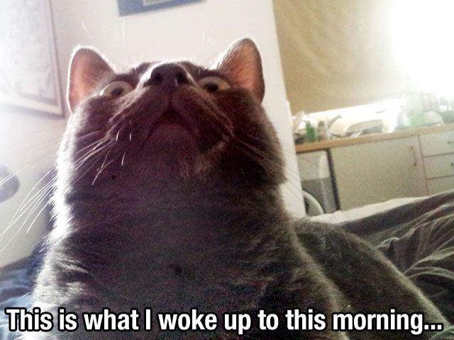 Animal Memes – Funny Animal Photo Gallery