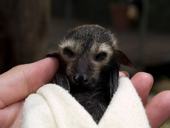 Baby Bats in Blankets - BuzzFeed Mobile