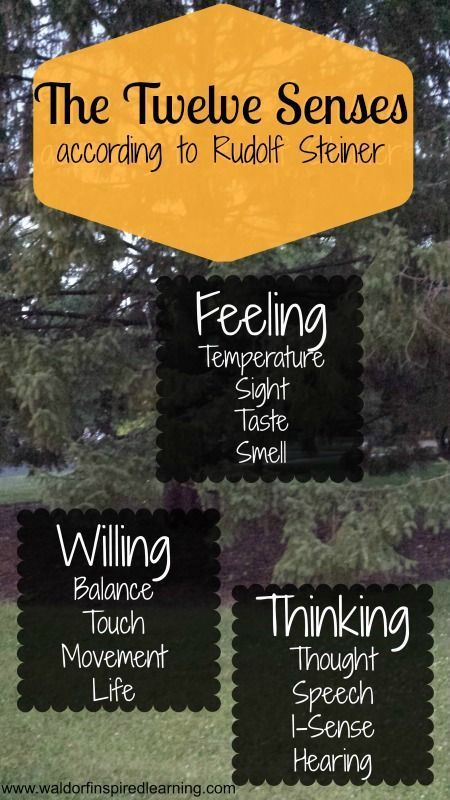 Remembering & Forgetting; and the Twelve Senses according to Rudolf Steiner. We want to nourish all of these senses as we make our Waldorf homeschooling plans. Read about the twelve senses at the Steiner Cafe.