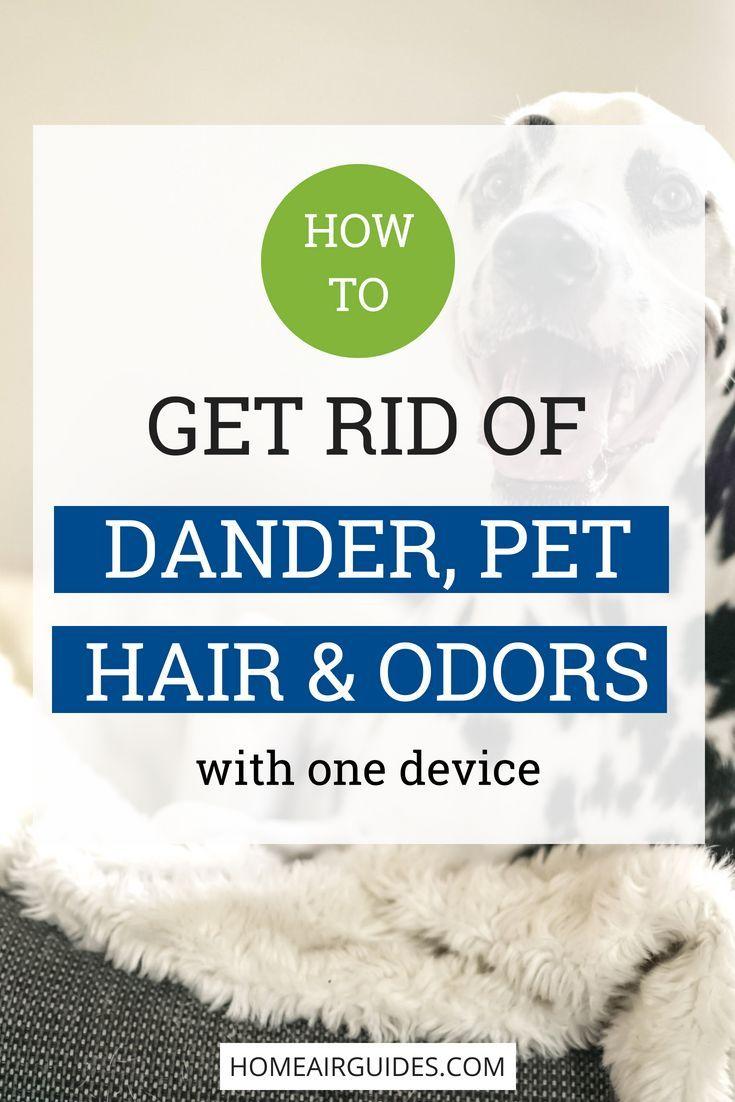 5e68e75b6a672691add9475d37521307 - How To Get Rid Of Cat Dander On Furniture