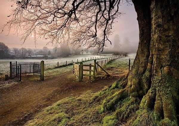 Derrymore Woods, Bessbrook, Co Armagh, Northern Ireland