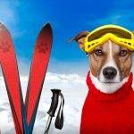 Skiurlaub mit Hund in Gastein buchen. Dogsitting inklusive