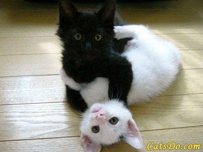 """what?"": Cats, Animals, Black And White, Pet, Black White, Kittens, Kitty, Black Cat"
