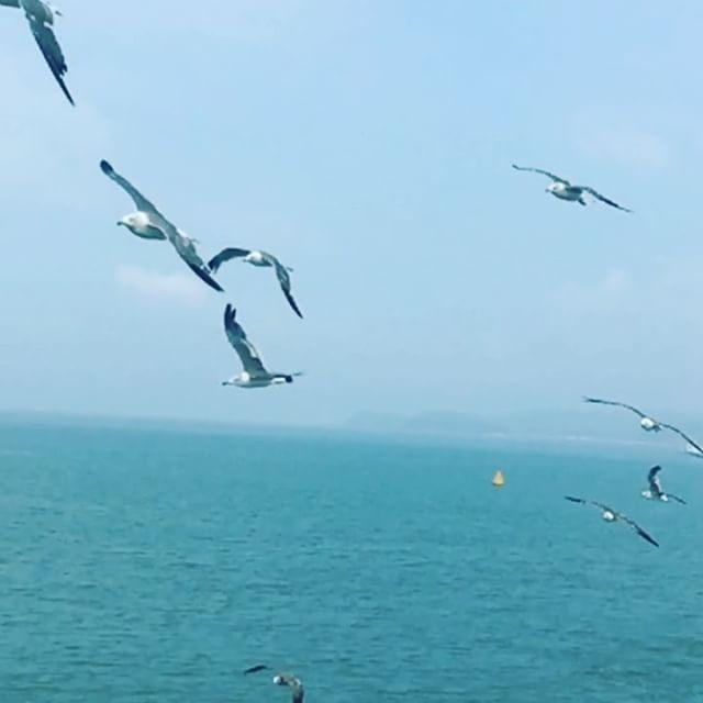 船 海 人が大好きな カモメ #韓国旅行