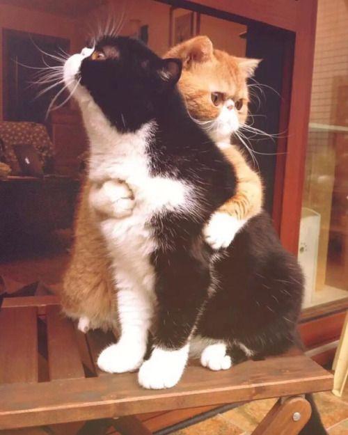 un abrazo de al guien que quiera es muy confortable