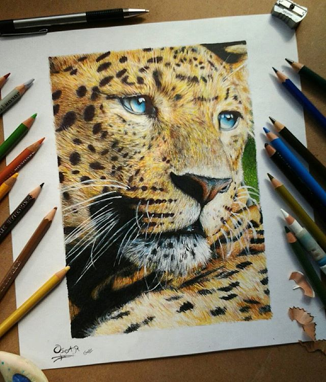 Leopardo #dibujos #drawings #sketch #painting #drawing #dibujo #gallery #arts_secret #draw #artwork #illustration #fabercastell #polychromos #art #pencildrawing #tacart #artist_features #polychromos #prismacolor #artistic #wildlifeart #colourpencil