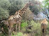 Pilanesberg Game Reserve North West Province. Fun Day trip n close to Sun City