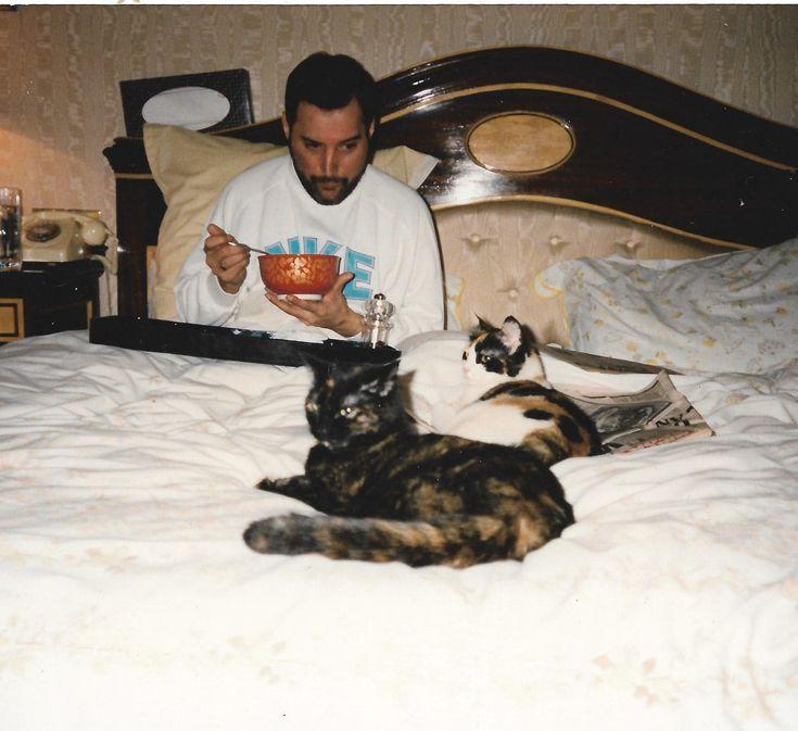 Let's discuss Freddie Mercury's cats, the spotlight of 'Bohemian Rhapsody'