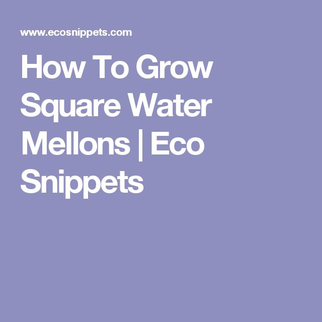 How To Grow Square Water Mellons | Eco Snippets