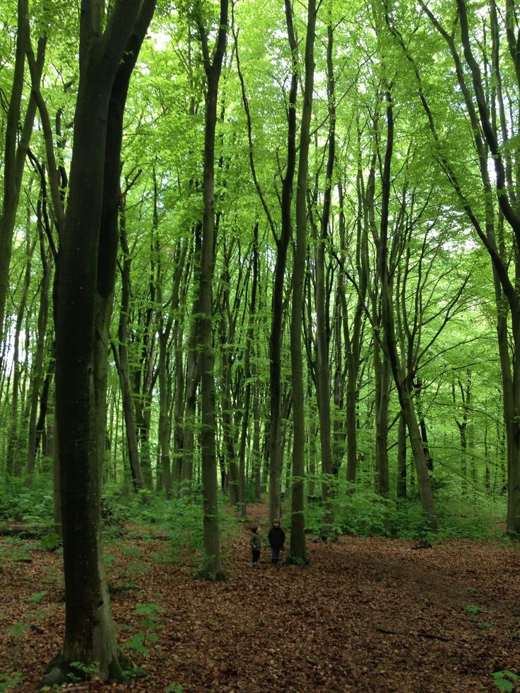 #Amsterdamse bos