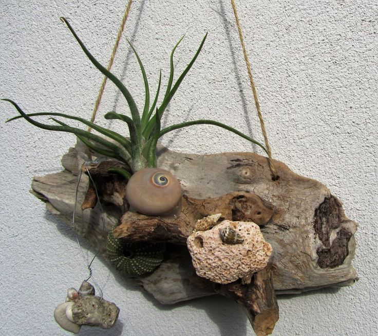 Air plant and driftwood arrangement by DriftwoodDecorByBeth on Etsy