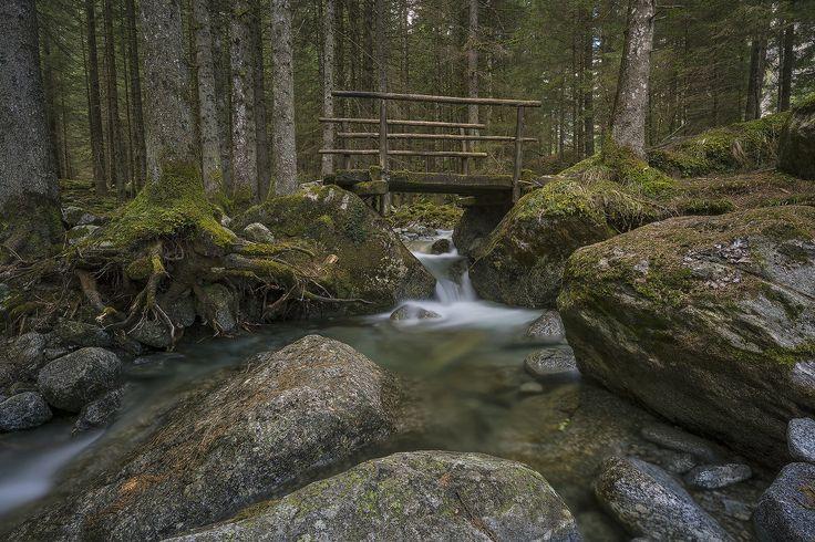 Particolare nel bosco dei Bagni Masino by Andrea Mottarella on 500px