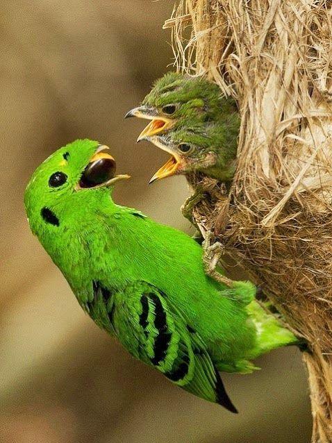 Dinner is served, birds and bird babies