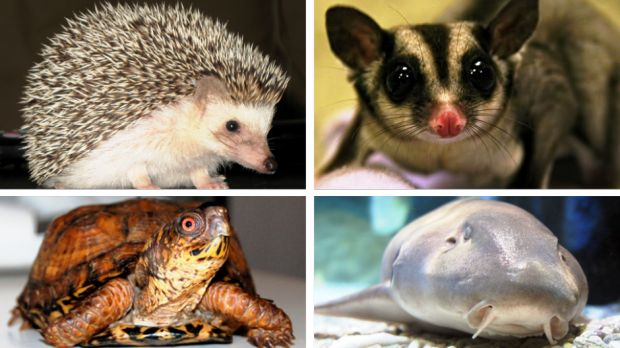 persuasive speech exotic animals as pets First of all, people can see wild, beautiful, exotic animals they can see how  animals live and behave secondly, animals have good life conditions in zoos  they.