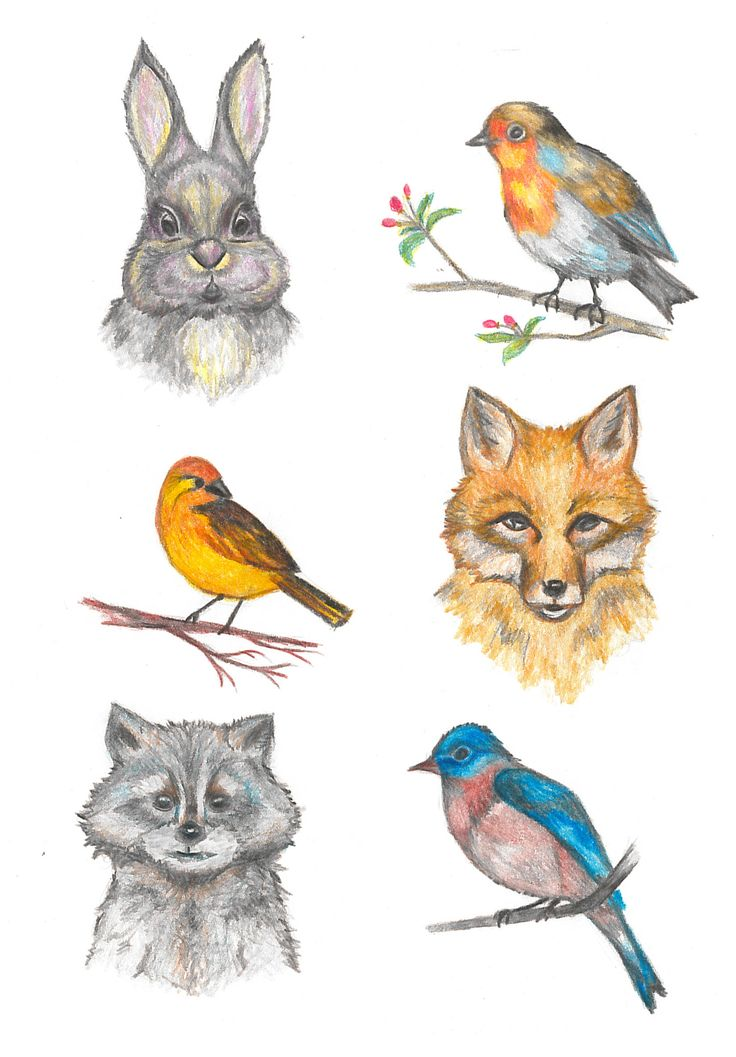 Animal illustration by color pencil: rabbit, raccoon and fox and three birds