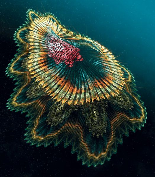 Spanish Dancer Jellyfish | from Divernet