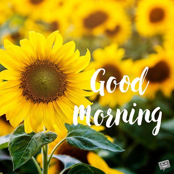 A New Day Starts Good Morning Pics Morning Pictures Good Morning Greetings Good Morning Cards