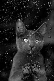 National Geographic, Black Cat, rain drops