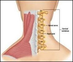 How Yoga-Exercises Cure Cervical Spondylosis & Neck Pain in 21 Days. Free Videos