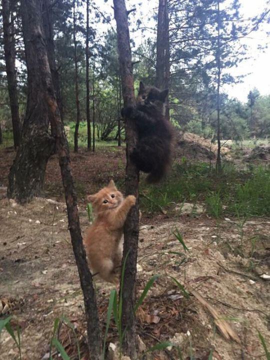 Kitty bears. New species. :)