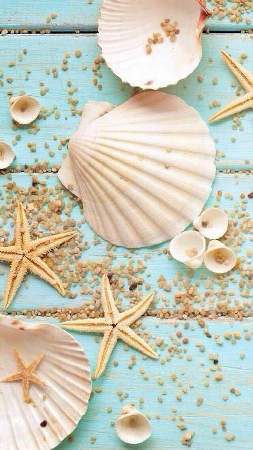Shellls and sea stars wallpaper perfect for the beach