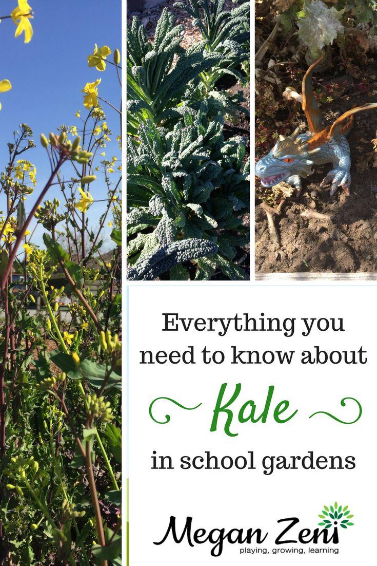 best Garden images on Pinterest Gardening tips Flower
