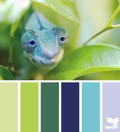 Caméléon Nuance de vert et de bleu