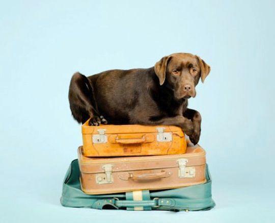 #Tips για άνετο ταξίδι με το #κατοικίδιο σου! http://blog.air2go.gr/2013/09/tips.html