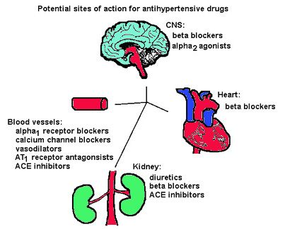 alpha and beta blockers | Beta 1 Agonists